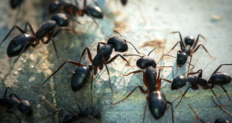Ant Control In Cape Coral FL