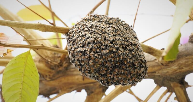 Bee Removal Service In Cape Coral