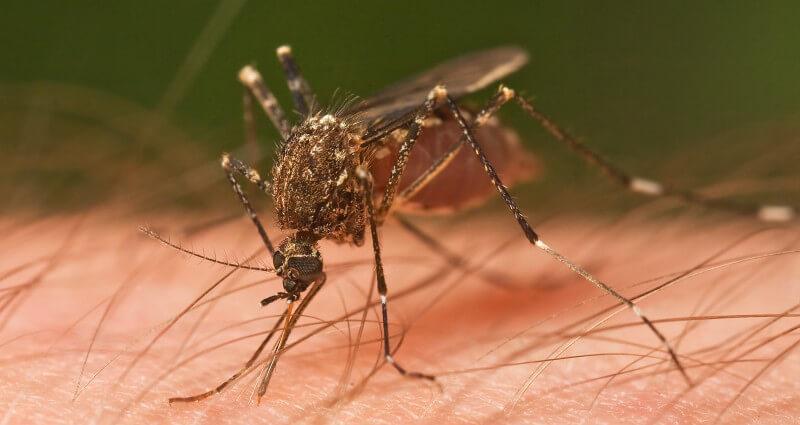 mosquito control service in Cape Coral