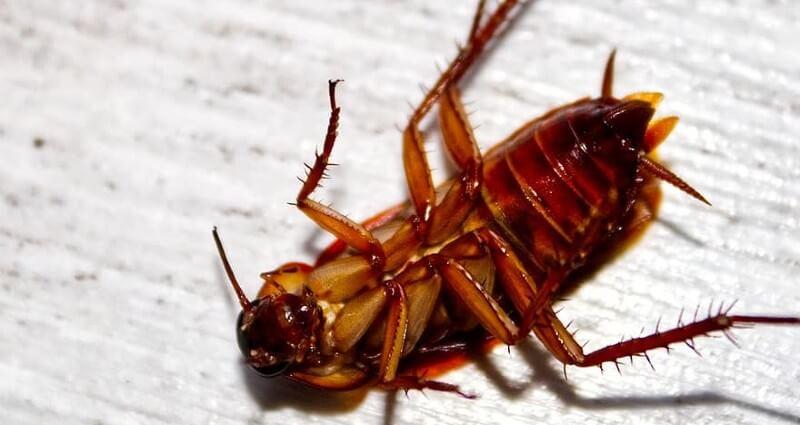 Roach Control Cape Coral FL