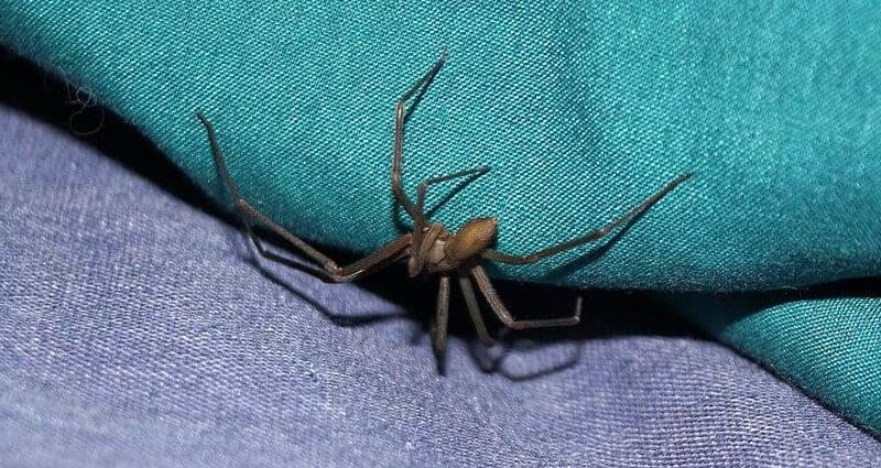 Spider Control In Cape Coral